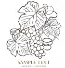 【CTP-014】葡萄  SAMPLE TEXT 矢量图