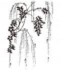 【AA-RTF-029】柳树 树藤 矢量图