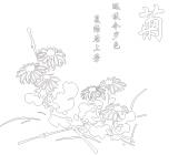 【YY-KT-286】菊花 矢量图