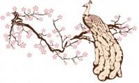 【KT-2657】梅花 孔雀登枝 矢量图